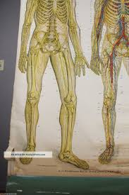 American Frohse Anatomical Charts Key 1918 Antique Frohse Nevous System Anatomical Chart Stunning