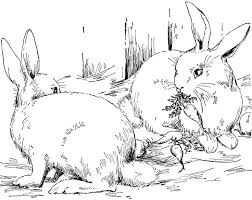 realistic rabbit coloring pages. Fine Realistic Realistic Bunny Coloring Pages Bunnies Color Google  For Adults Animals   And Realistic Rabbit Coloring Pages R