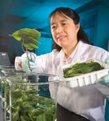 Food Safety Specialist Usda Living Science