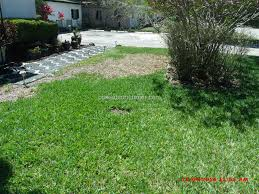trugreen lawn service review 201962