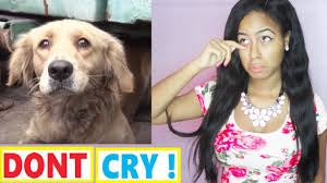 Try Not To Cry: Scared Golden Retriever Dog panics during her ...