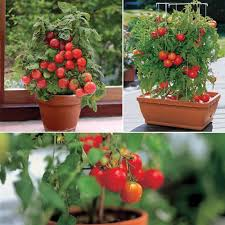 container gardening for beginners. Beginners Guide: 10 Easiest Vegetables To Grow In A Pot, Container Gardening For