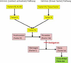 Coagulation Cascade Coagulation Cascade Diagram Pathways
