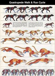 as i try to hand draw a walk cycle this is a good reference as i try to hand draw a walk cycle this is a good reference