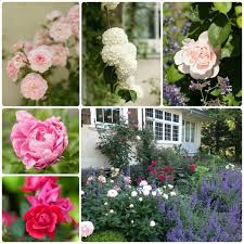 Small Picture My Garden An Affinity for Roses Garden Design