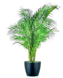 big house plants indoor common best large uk