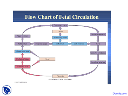 Venous Blood Flow Chart Flow Chart Of Fetal Circulation Cardiology Lecture