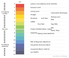 Hydrochloric Acid Price Chart What Is Gastric Acid Stomach Acid Is It Diluted When We