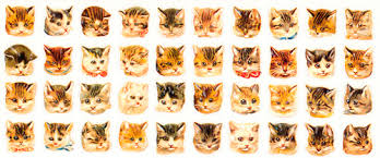cute cat backgrounds tumblr. Fine Backgrounds Cats Cats Etc And Cute Cat Backgrounds Tumblr