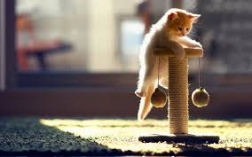 cute kittens playing wallpaper. Wonderful Playing Cute Kitten Playing To Kittens Wallpaper S