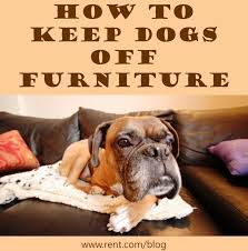 47 best Pets in Apartments images on Pinterest