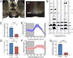 Bright daytime light enhances circadian amplitude in a diurnal mammal