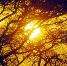 Resultado de imagen de fotos de luz natural