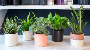 Indoor houseplants you can\u0027t kill (unless you try really, really ...
