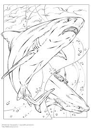 Small Picture Coloring page bull shark img 5735