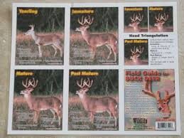 Deer Antler Age Chart Whitetail Buck Age Chart