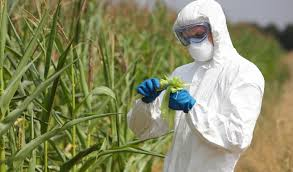 can a growing world feed itself out genetically modified crops can a growing world feed itself out genetically modified crops