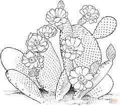 Small Picture Opuntia prickly pear cactus coloring page Free Printable