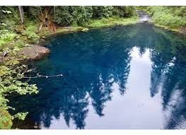 tamolitch blue pool.  Blue Trees Reflected In Tamolitch Blue Pool And