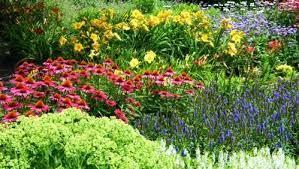 florida plants florida flowers
