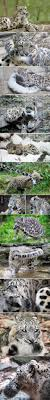 124 best images about Animals on Pinterest Funny Lol funny and Cats