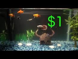 Aquarium Backgrounds Diy Aquarium Background Youtube