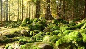 at least 20 000 species of non vascular plants exist these plants rank among the oldest types of plants on earth