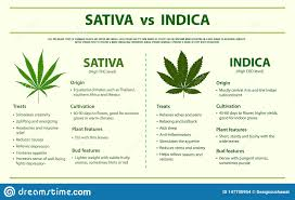 Sativa And Indica Chart Sativa Vs Indica Horizontal Infographic Stock Illustration