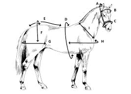 Measurement Charts Ideal Equestrian
