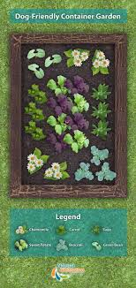 Dog Friendly Garden Plan which can be planted in your yard with no worry  about if