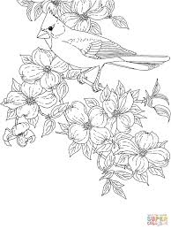 Bird Colouring Pages For Adults Bird Colouring Pages For Adults
