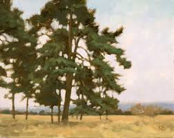 oil sketch of pine trees painting of scots pines in caledonian forest