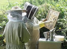Αποτέλεσμα εικόνας για new beekeeper