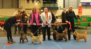 2020 Cairn Terrier CHAMPIONSHIP SHOW Results