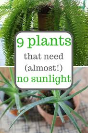 Image Grow Indoors Plants That Grow With Little Sunlight Gardening Gardening Tips Indoor Gardening Low Sunlight Plants Tall Dining Room Table Thelaunchlabco Plants That Grow With Little Sunlight Gardening Gardening Tips