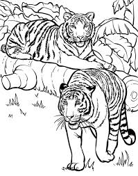 Small Picture Two Tigers Ready for Hunting Coloring Page Two Tigers Ready for