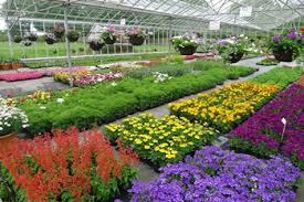 Image result for bedding plants
