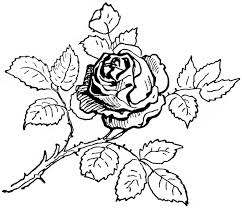 rose coloring page for free realistic rose coloring page