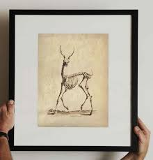 Vintage Deer Skeleton Print Animal Anatomy Study Educational Biology Scientific Chart Diagram A017p