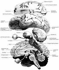 Рефераты курсовые работы дипломные работы по психологии психология