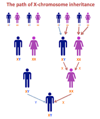 X Chromosome Inheritance Chart Dna And Family Tree Research Step 3 2 A Match On The X
