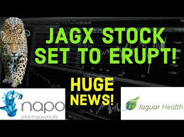 Since then, jagx shares have increased by 222.2% and is now trading at $1.45. Jaguar Health Jagx Stock Breaks Out Of 5 Month Downtrend Youtube