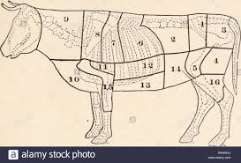 Human Meat Cuts Chart Cuts Of Beef Diagram Stock Photos Cuts Of Beef Diagram