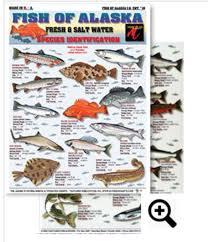 Fish Of Alaska Id Chart 16 Saltwater Fishing Freshwater