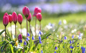 Spring flowers wallpapers HD ...
