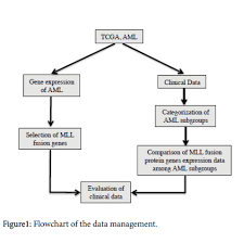 Clinical Data Management Flow Chart Flowchart Of The Data Management Download Scientific Diagram