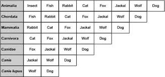 The Image Below Shows How Wolves And Dogs Compare To Some