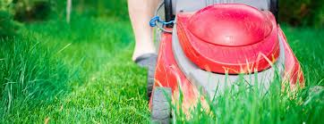 Spring Lawn Care After Snow Rain Or Drought