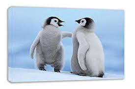 baby penguin. Delighful Penguin CUTE BABY PENGUIN CHICKS CANVAS WALL ART 30u201d X 18u201d To Baby Penguin E