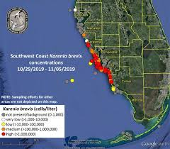 High Concentrations Of Red Tide Found In Sarasota County